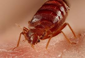 bed bug removal in skiatook