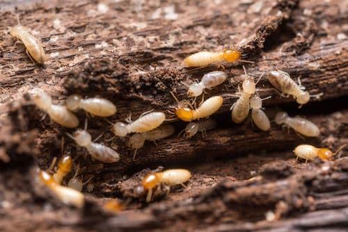 Sapulpa Pest Control