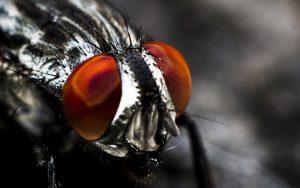 Oologah Pest Control