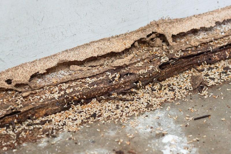 Professional Termite Removal